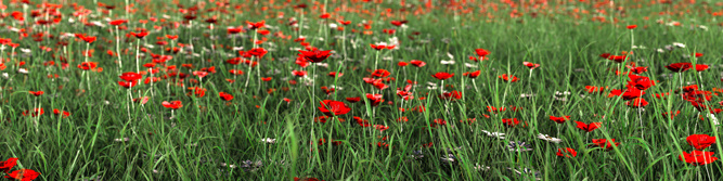 Remembrance (Remembrance Day)