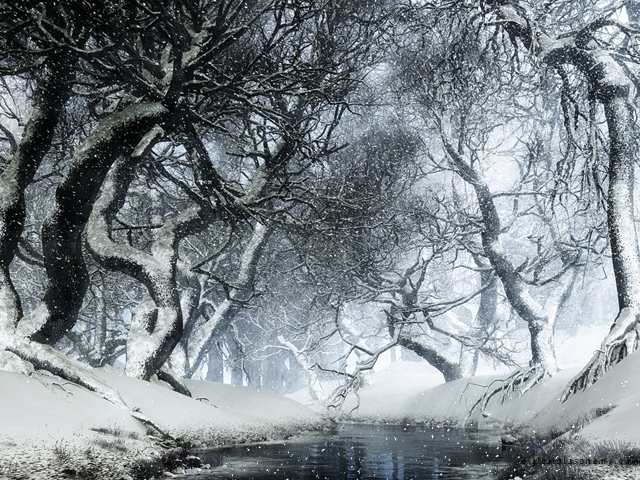Purchase ... & Digital Blasphemy 3D Wallpaper: Canopy Creek (Winter) by Ryan Bliss