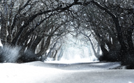 Sleepwalker Woods (Winter)