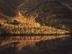 Aspen Lake (Autumn)